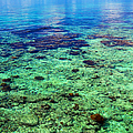 Coral Reef Near The Island At Peaceful Day. Maldives by Jenny Rainbow