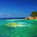 Coral Seas Haiti by Laura D Young