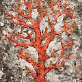 Coral Thru Coral by Kaata    Mrachek