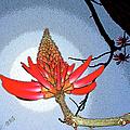Coral Tree by Ben and Raisa Gertsberg