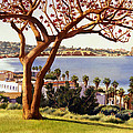 Coral Tree With La Jolla Shores by Mary Helmreich