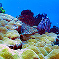 Corals Underwater by Paul Ranky