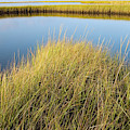 Cordgrass And Marsh, Southern by Andrew Kornylak