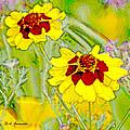 Coreopsis Flowers by A Gurmankin