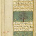 Corinda Tree (carissa Carandas) by British Library
