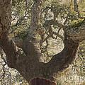 Cork Oak Tree by Heiko Koehrer-Wagner