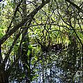 Corkscrew Swamp 3 by Nancy L Marshall