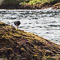 Cormorant - Montague Island - Australia by Steven Ralser
