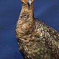 Cormorant by J L Woody Wooden