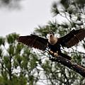 Cormorant On Jekyll Island by Bruce Gourley