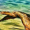 Cormorant On The Move by Deborah Benoit