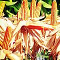 Corn by A Rey