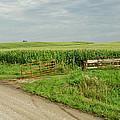 Corn Clouds Sun Rusty Gate by Wilma  Birdwell