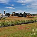 Corn Farmer by Skip Willits
