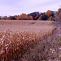 Corn Field In The Fall by Paul Cannon