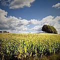 Corn Field by Les Cunliffe