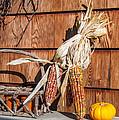 Corn by Guy Whiteley