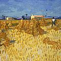 Corn Harvest In Provence by Georgia Fowler