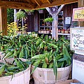 Corn by Janice Drew