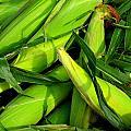Corn by Jim Harris