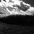 Corn Maze 03bw by Edward Paul