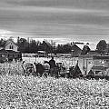 Corn Picker November 2013 by David Arment
