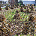 Corn Shocks Amish Field by David Arment