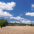 Cornfield And Finca Near Sineu by Panoramic Images