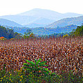 Cornfield In The Mountains by Duane McCullough