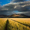 Cornfield Mountains by Matthew Gibson