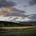 Cornfield Sunset by Lisa Bryant