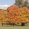 Corning Fall Foliage 1 by Tom Doud
