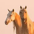Corona And Cheyenne At Dawn by Carol Walker