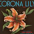 Corona Lily Crate Label by label Art