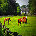 Corralled Horses - Featured In And Lets All Participate And Abc Groups by Ericamaxine Price