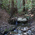 Corte Madera Creek On Mt. Tam In 2008 by Ben Upham III