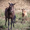 Cortez Colorado Mustangs by Janice Rae Pariza