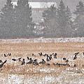 Corvus Field by Jouko Lehto