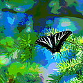 Cosmic Butterfly In The Pines by Ben Upham III