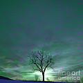 Cosmic Sky Winter Tree by John Stephens