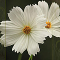 Cosmos And Hearts by Karen Beasley