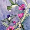 Costa Hummingbird Family by Marilyn Smith