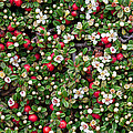 Cotoneaster Bush Background by Andrea Casali