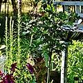 Cottage Bird Garden by VLee Watson