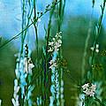 Cottage Garden Three by Bonnie Bruno