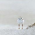 Cotton Ball With Legs by Don Schroder