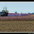 Cotton Harvest by Debbie Portwood