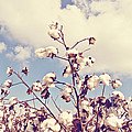 Cotton In The Sky With Filter by Scott Pellegrin