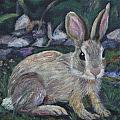Cottontail by Jill Ciccone Pike