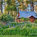 Cottonwood Cottage Spring 2014 Photographs Taken By Omaste Witko by Omaste Witkowski